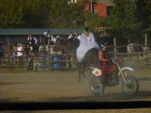 cavalli enduro maremma