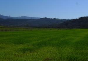 campi cereali maremma
