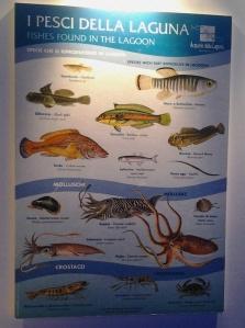Pannelli illustrativi delle specie in laguna