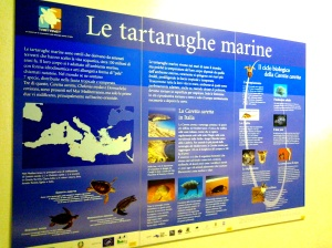 A talamone l acquario della laguna di orbetello turismo for Vasche per tartarughe marine
